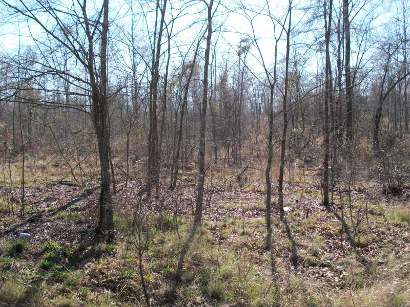 37 Acres Saluda Image