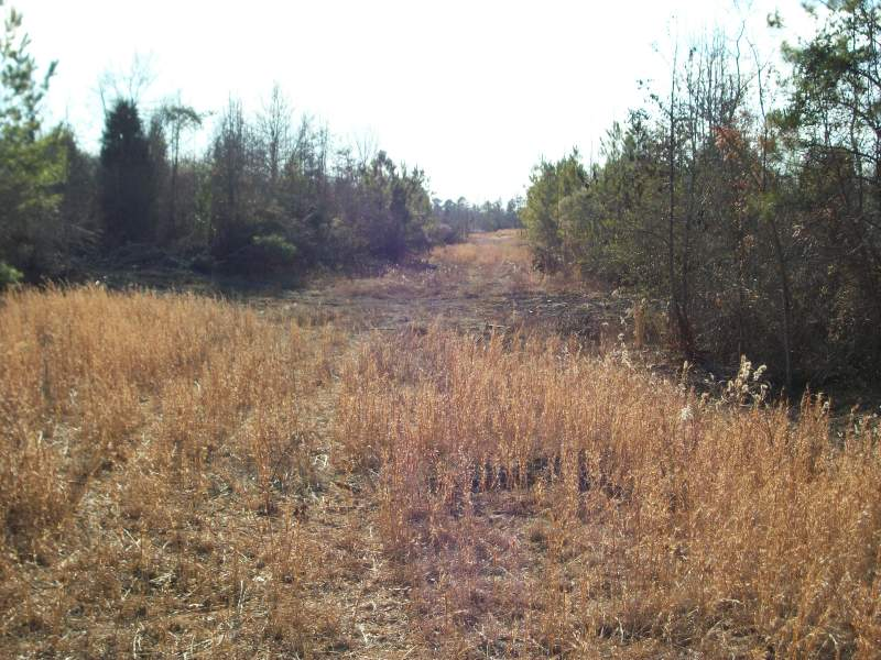 62 acres Saluda County Image