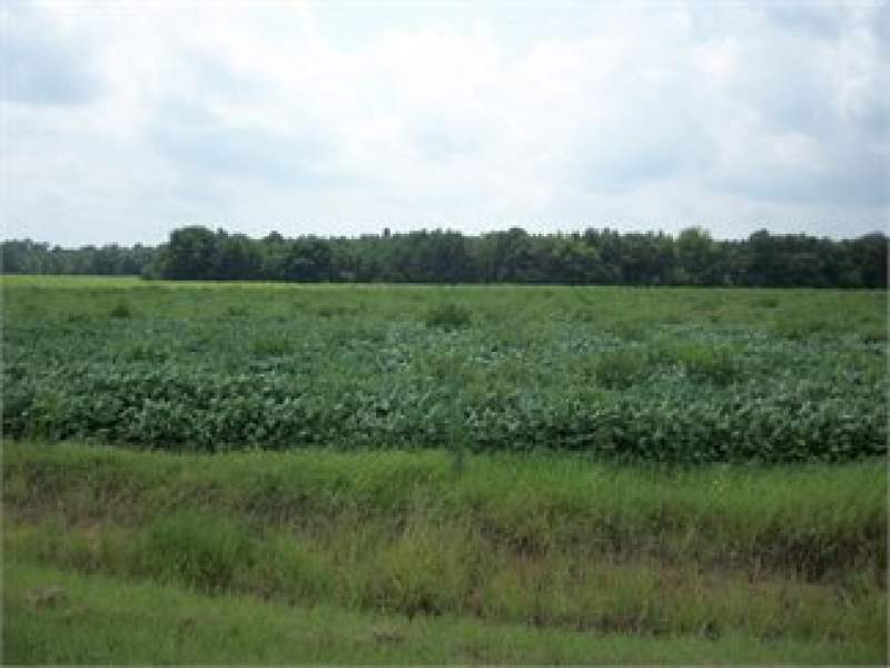 Bishopville, Lee County, South Carolina Land For Sale - 2.2 Acres Image