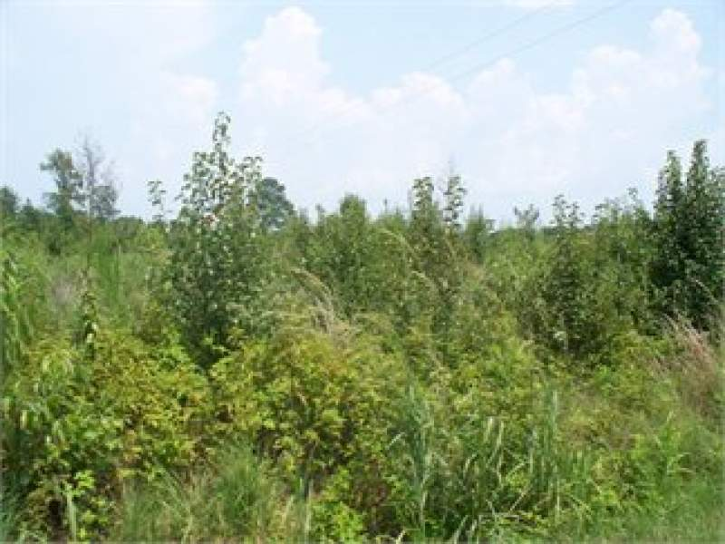 Elliot, Lee County, South Carolina Land For Sale - 2.7 Acres Image
