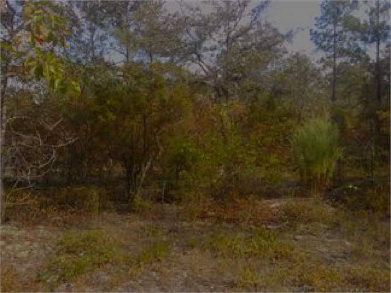 Leesville, Lexington County, South Carolina Homesite For Sale - 1.6 Acres Image